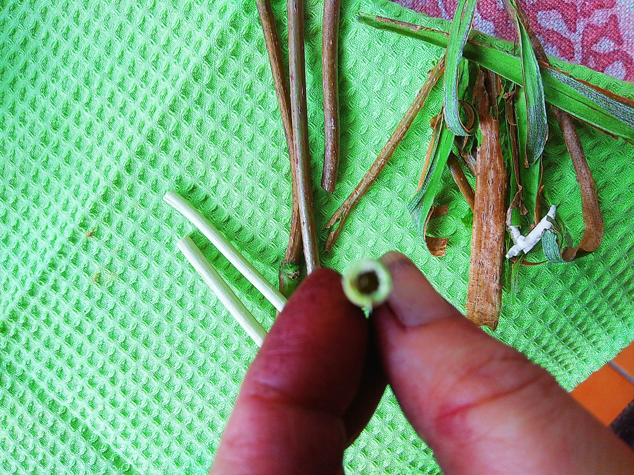 Pajitas ecológicas de ramas de saúco. Cocinandocaza