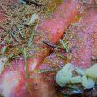 marinadas-para-carne-de-caza-vinagre